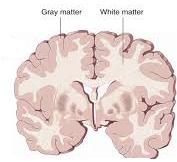 brain health for careers